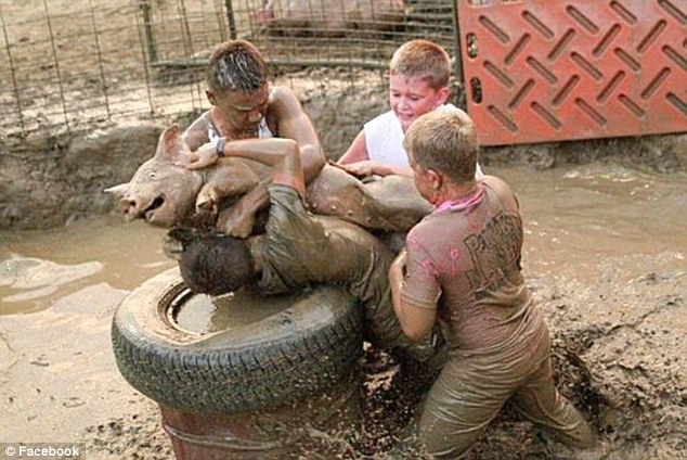Church cancels pig wrestling event after complaints by ...